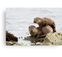 Otter Mum With a Playful Cub Canvas Print