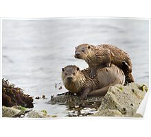 Otter Mum With a Playful Cub Poster