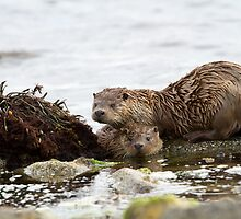 Otter Mum with a Cub  by dgwildlife