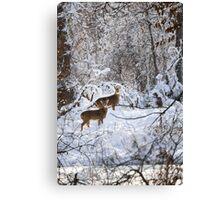 A Winter Wonderland Canvas Print