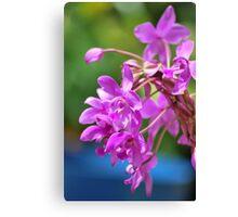 January Blossom Canvas Print