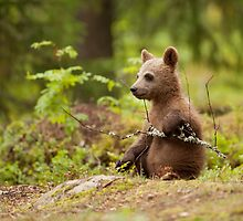 Lonely Cub by dgwildlife