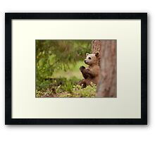 Tired Cub Framed Print