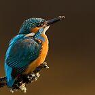 Kingfisher by dgwildlife