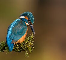 Kingfisher by dgwildlife