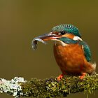 Lady With a Fish by dgwildlife