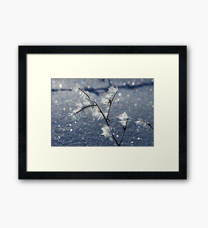 Hoar Frost Delight Framed Print