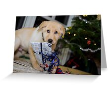 Puppys 1st xmas Greeting Card