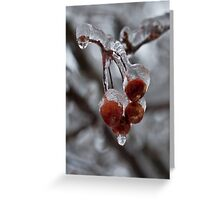 Frozen Apples! Greeting Card