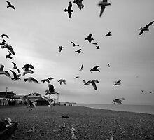 Seagulls  by Emma Bennett