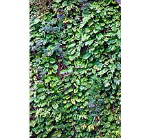 Wall of Green  Photographic Print