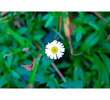 Tropical Aster  Photographic Print