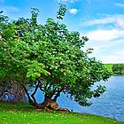 Tree and Waokele Pond  by Robert Meyers-Lussier