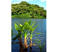Waokele Pond and Palms  Photographic Print