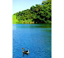 Waokele Pond and Goose  Photographic Print