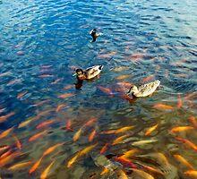Waokele Pond and Koi Study 6  by Robert Meyers-Lussier