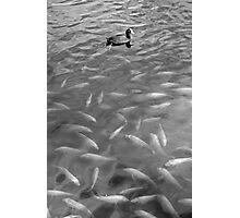 Waokele Pond and Koi Study 4  Photographic Print