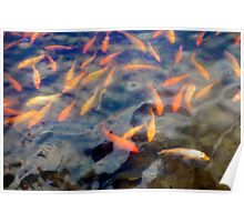 Waokele Pond and Koi Study 5 Poster
