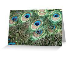 Peacock 'eyes' Greeting Card