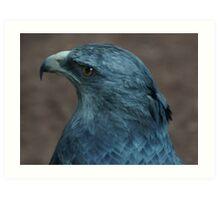 1414 eagle grey lg Art Print