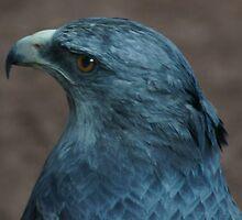 1414 eagle grey lg by pcfyi