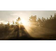 Sunrise bursting through trees and mist Photographic Print