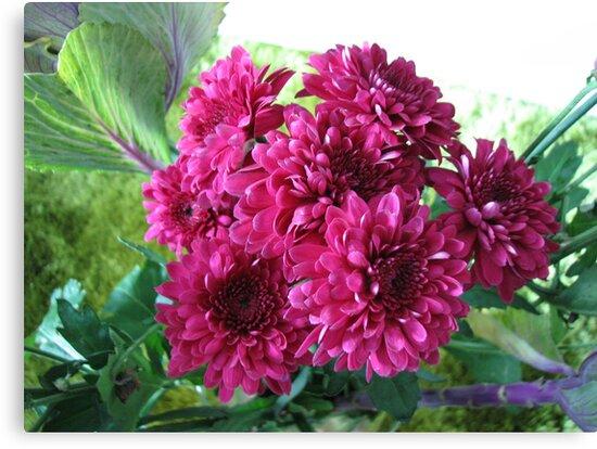 Deep Pink Chrysanthemums by MidnightMelody