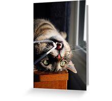 Catfish Greeting Card