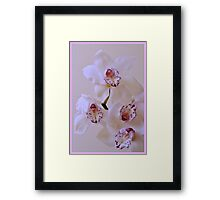 Soft Orchid Dream. Framed Print