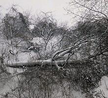 Fallen Trees by Shulie1