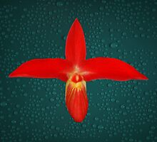 Bright Red Orchid Natural Color by Gotcha29