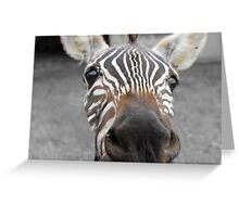 Crazy For Your Stripes Greeting Card