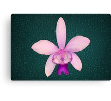 Orchid Award Winning Pink Purple Flower Natural Canvas Print