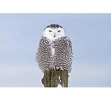 Snowy Owl on post Photographic Print