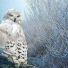The Mystical Snowy Owl by Tarrby