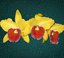 Yellow and Red Orchids Delicate Flowers by Gotcha29