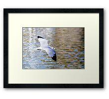 Bird in Flight-2 Framed Print