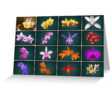Orchid Collage a Stunning Collection of 16 Orchids Greeting Card