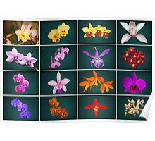 Orchid Collage a Stunning Collection of 16 Orchids Poster