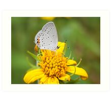 Hairstreak On Yellow Art Print