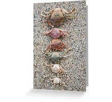 Crab molts Greeting Card