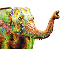 Tilly The Silly Elephant Photographic Print