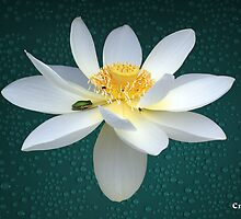 The Lotus Flower the Frog and the Bee by Gotcha29