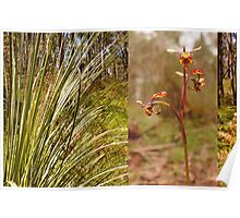 Grass tree and orchid - Sinclair's Gully, Norton Summit, Adelaide Hills Poster