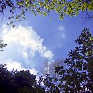 Woodland Clouds by acrichton