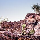 Cactus on a Cliff by onyonet photo studios