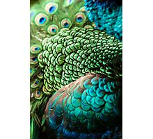 Plumage Photographic Print