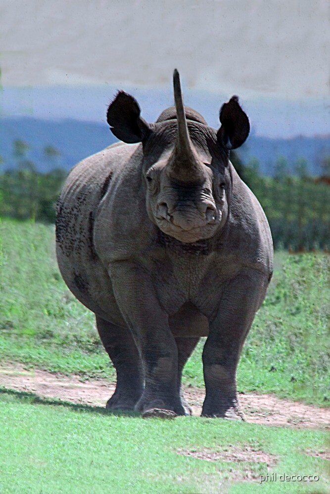 Hook Lipped Black Rhino by phil decocco
