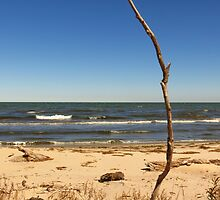 Lake Erie At Sheldon Marsh 3 by SRowe Art