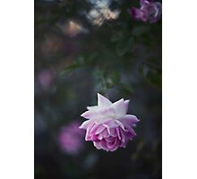 Lone Beauty - Purple Flower Photograph Photographic Print